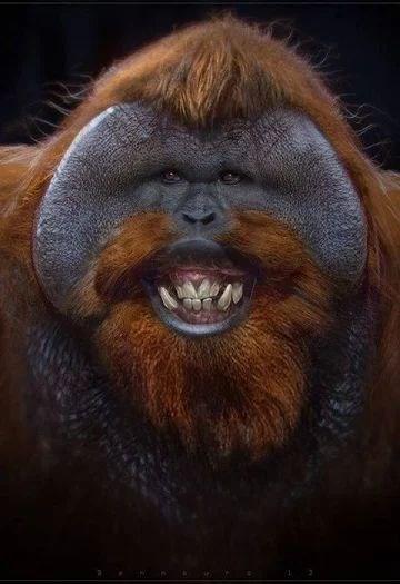 orangutan smiling at the camera