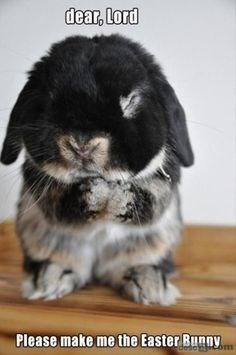 Rabbit - dear, Lord Please make me the Easter Bunny om