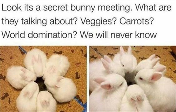 Adaptation - Look its a secret bunny meeting. What are they talking about? Veggies? Carrots? World domination? We will never know nou