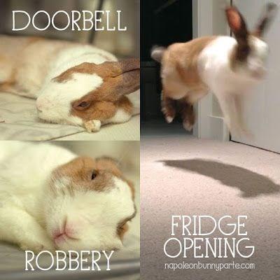 Rabbit - DOORBELL FRIDGE OPENING ROBBERY napoleonbunnyparte.com
