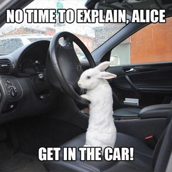 Vehicle door - NOTIMETO EXPLAIN,ALICE GET IN THE CAR!