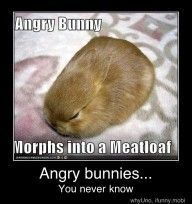 Photo caption - Angry Bunny Morphs into a Meatloaf Angry bunnies... You never know whytine, inny mot