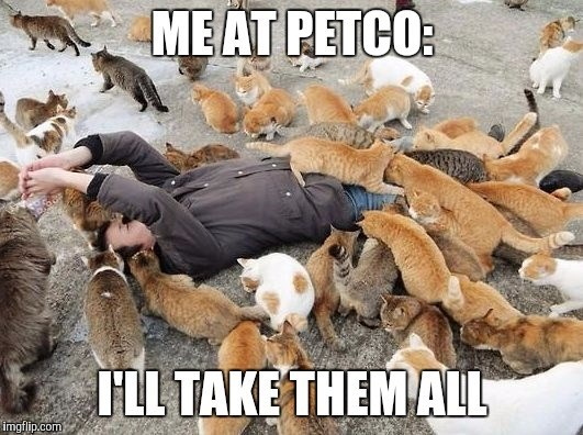 crazy cat lady meme with pic of person laying on the ground surrounded by cats