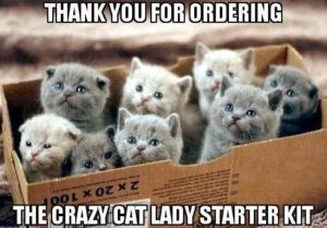 crazy cat lady starter kit with pic of box filled with kittens