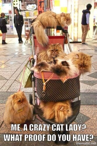 crazy cat lady meme with pic of cart filled with cats