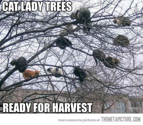 cat lady meme with pic of tree filled with cats ready to be picked