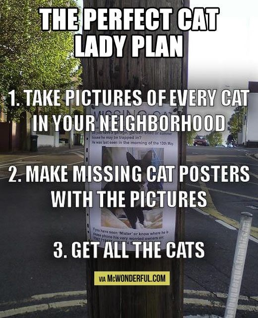 crazy cat lady meme about collecting cats from the street