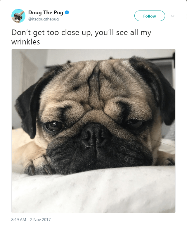 Dog - Doug The Pug Follow @itsdougthepug Don't get too close up, you'll see all my wrinkles 8:49 AM 2 Nov 2017
