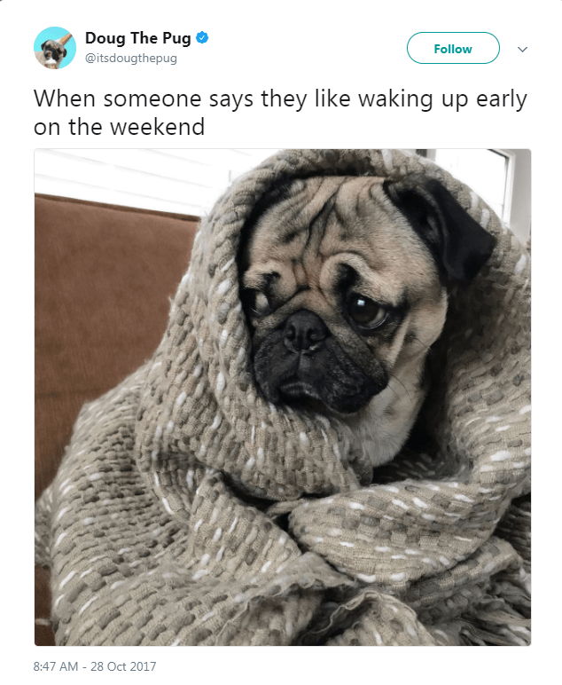 Pug - Doug The Pug Follow @itsdougthepug When someone says they like waking up early on the weekend 8:47 AM 28 Oct 2017