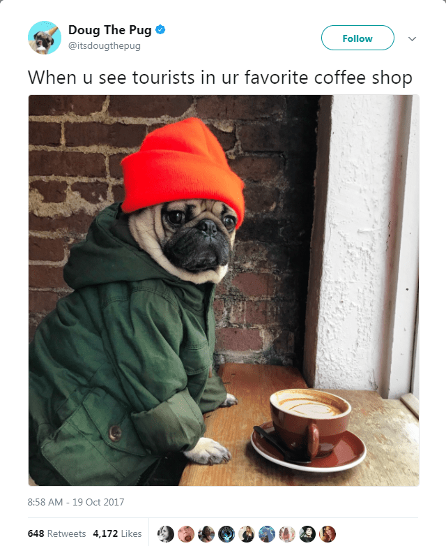 Photo caption - Doug The Pug Follow @itsdougthepug When u see tourists in ur favorite coffee shop 8:58 AM-19 Oct 2017 648 Retweets 4,172 Likes