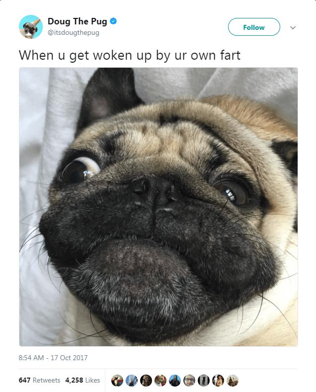 Pug - Doug The Pug Follow @itsdougthepug When u get woken up by ur own fart 8:54 AM - 17 Oct 2017 647 Retweets 4,258 Likes