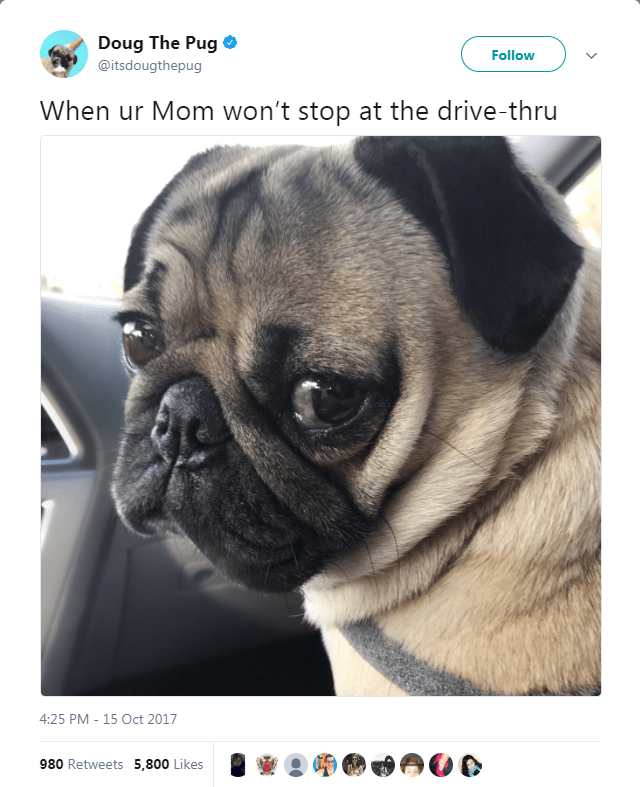 Pug - Doug The Pug Follow @itsdougthepug When ur Mom won't stop at the drive-thru 4:25 PM 15 Oct 2017 980 Retweets 5,800 Likes