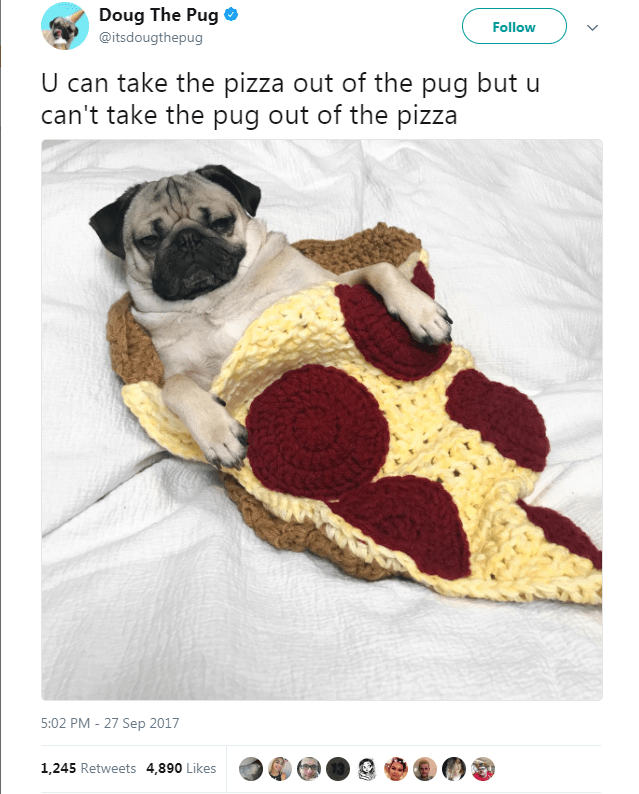 Pug - Doug The Pug Follow @itsdougthepug U can take the pizza out of the pug but u can't take the pug out of the pizza 5:02 PM - 27 Sep 2017 1,245 Retweets 4,890 Likes