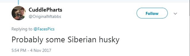 Text - CuddlePharts Follow @OriginalMtabbs Replying to@Faces Pics Probably some Siberian husky 5:54 PM-4 Nov 2017