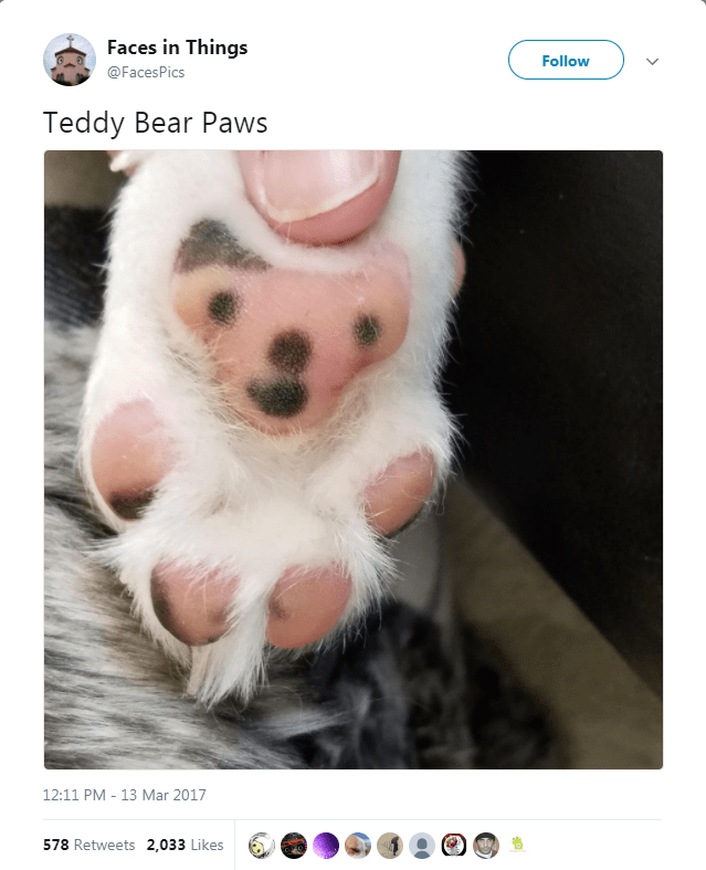 Puppy - Faces in Things Follow @FacesPics Teddy Bear Paws 12:11 PM 13 Mar 2017 578 Retweets 2,033 Likes