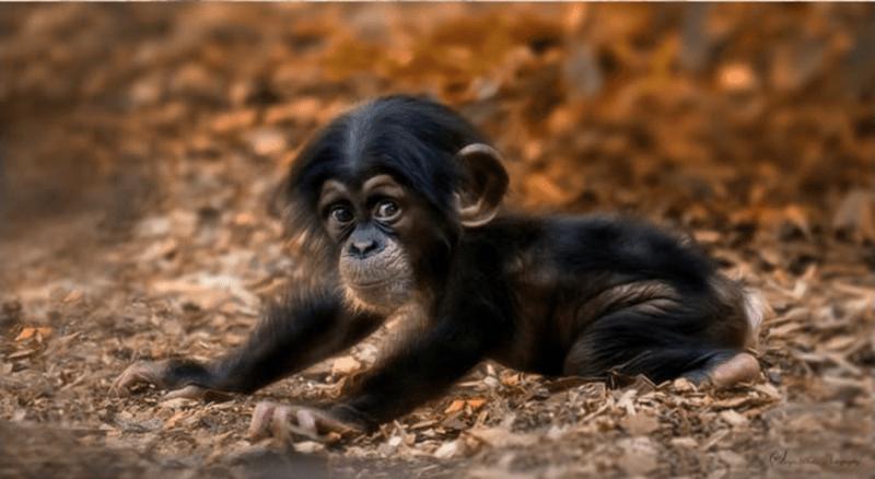baby animals - Vertebrate