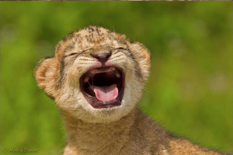 baby animals - Vertebrate - ihlcy Vineent
