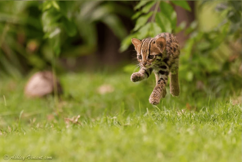 baby animals - Mammal - Hshley Vinccnt.com