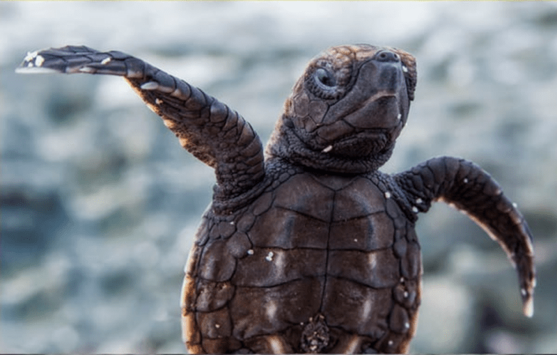 baby animals - Reptile