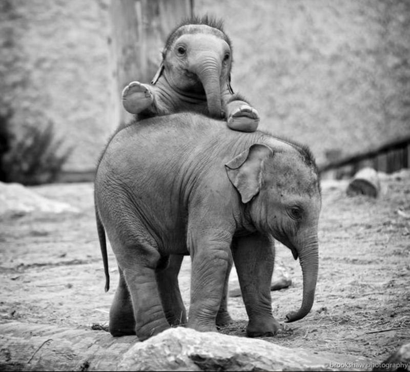 baby animals - Elephant