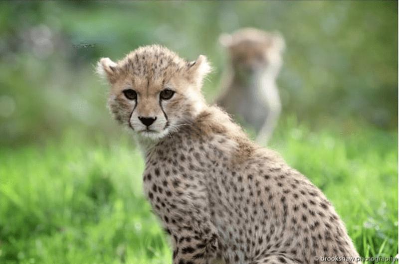 baby animals - Terrestrial animal - Brookshaw phography