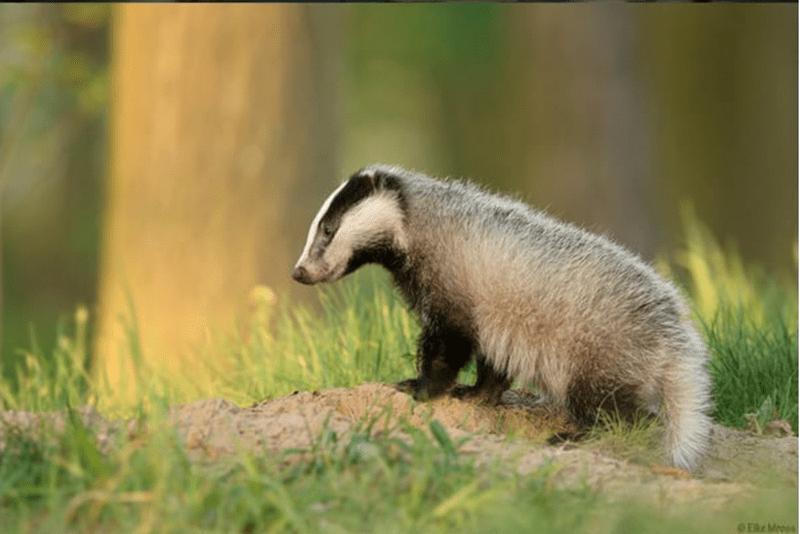 baby animals - Mammal - Eke Mros