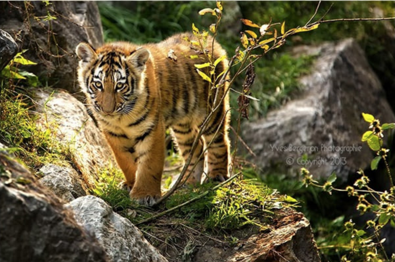 baby animals - Mammal - WesBargeren Photographie Copyrigh 20k3