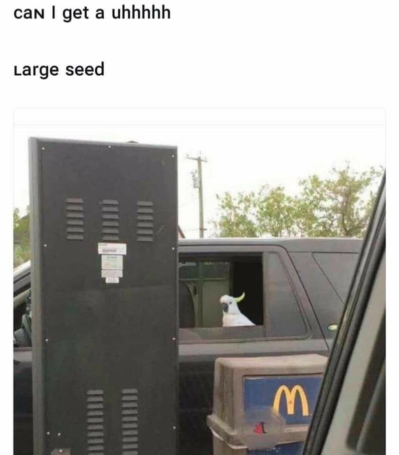 Funny meme about ordering a large seed in drive thru as a bird.