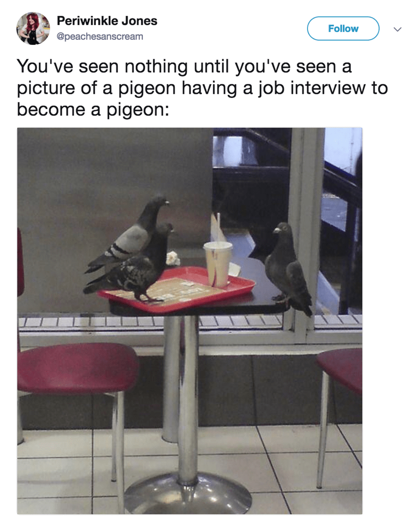 Furniture - Periwinkle Jones Follow @peachesanscream You've seen nothing until you've seen a picture of a pigeon having a job interview to become a pigeon:
