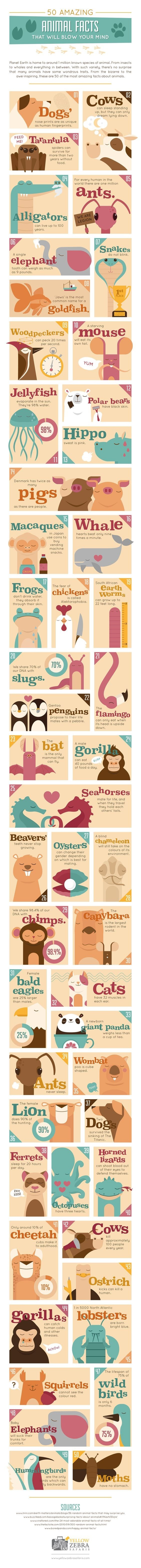 animals infographics facts - 9093890304