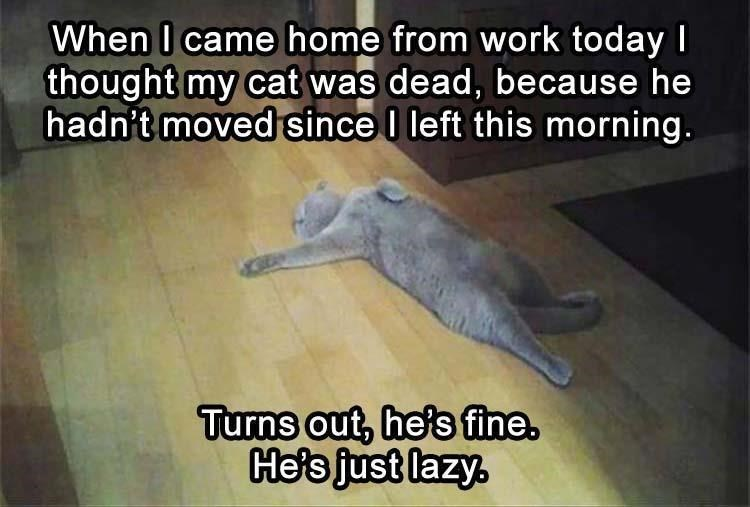 Photo caption - When I came home from work today I thought my cat was dead, because he hadn't moved since I left this morning. Turns out, he's fine. He's just lazy.