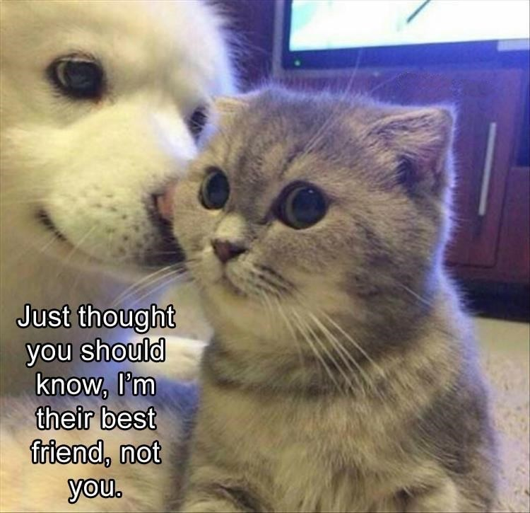 Cat - Just thought you should know, I'm their best friend, not you.