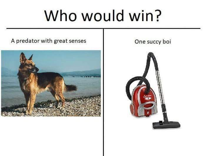 Funny meme about how dogs hate vacuum cleaners.
