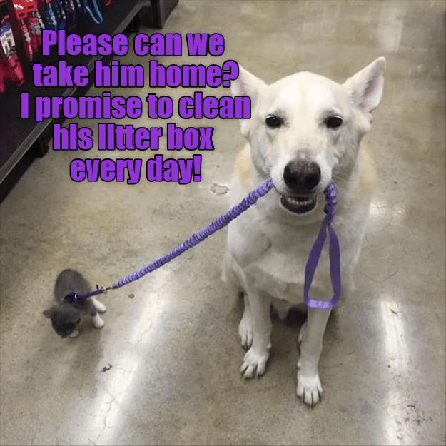cat meme - Dog - Please can we take him home I promise to clean his litter box every day!