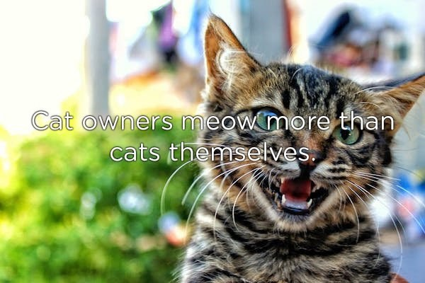 Cat - Cat owners meowmore than cats themselves