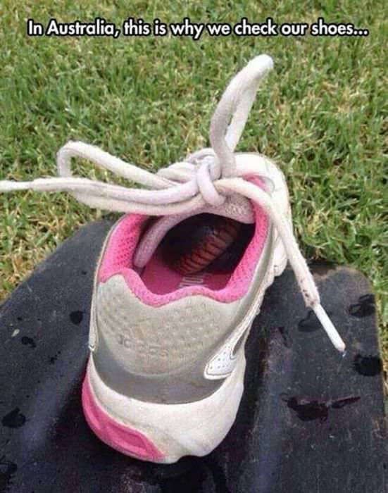 Footwear - In Australia, this is why we check our shoes..