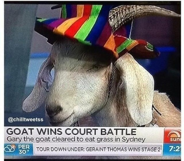 Goats - @chilltweetss GOAT WINS COURT BATTLE Gary the goat cleared to eat grass in Sydney sun PERTOUR DOWN UNDER: GERAINT THOMAS WINS STAGE 2 7:2 30 AONA