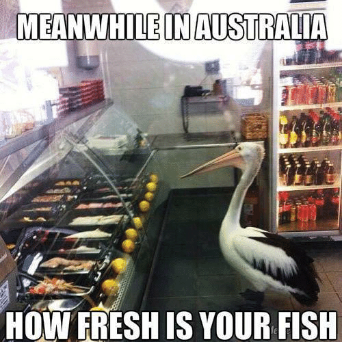 Bird - MEANWHILE IN AUSTRALIA HOW FRESH IS YOUR FISH