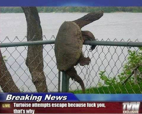 Organism - Breaking News LIVE Turtoise attempts escape because fuck you, that's why TVN EXCLUSIVE