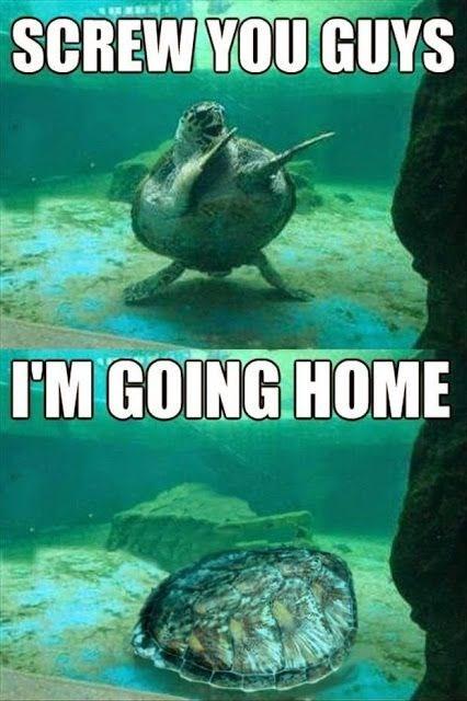 dabing turtle meme