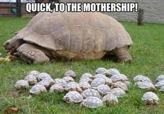 funny turtle meme of a tortoise and a bunch of little ones and they call the momma a mothership, like UFOs