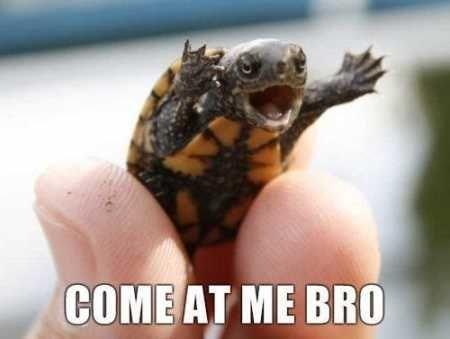 cute adorable turtle meme COME AT ME BRO