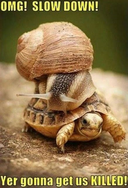 meme of a snail riding a turtle and complaining about the speed