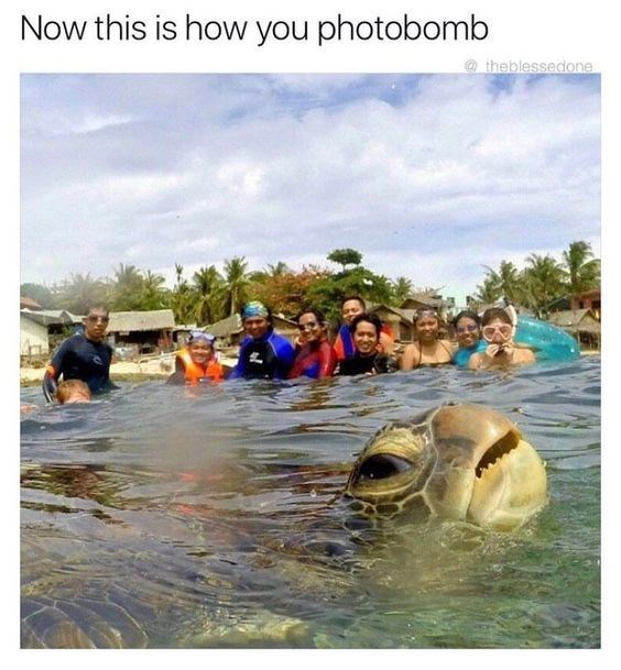 photobomb meme of turtle foregrounding a crowd