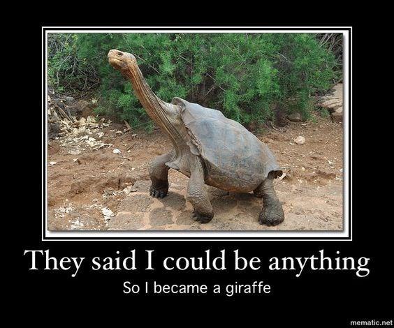 funny meme of a giraffe turtle