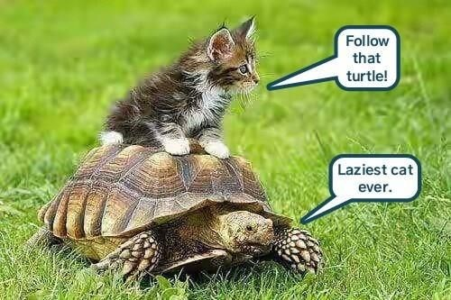 funny meme of cat riding a turtle