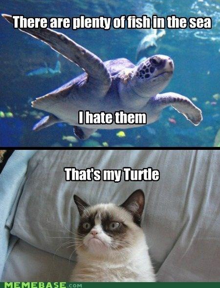 funny meme of Grumpy Cat's turtle