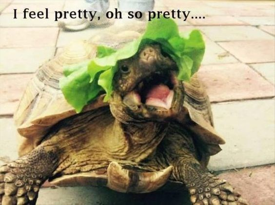 turtle meme of feeling pretty because of a lettuce hat