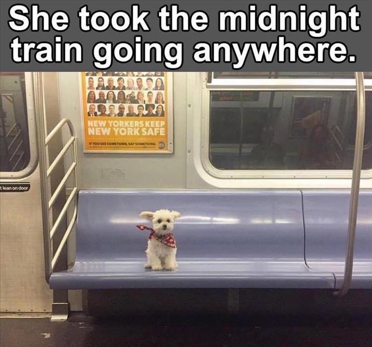 Memes animals - 9094816768