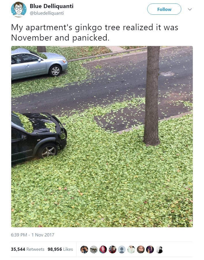 Grass - Blue Delliquanti @bluedelliquanti Follow My apartment's ginkgo tree realized it was November and panicked. 6:39 PM 1 Nov 2017 35,544 Retweets 98,956 Likes